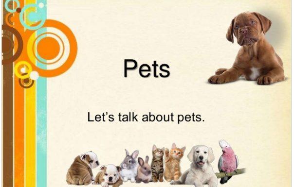 ESL Pets Vocabulary and Grammar Lesson