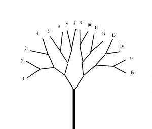 pronunciation tree